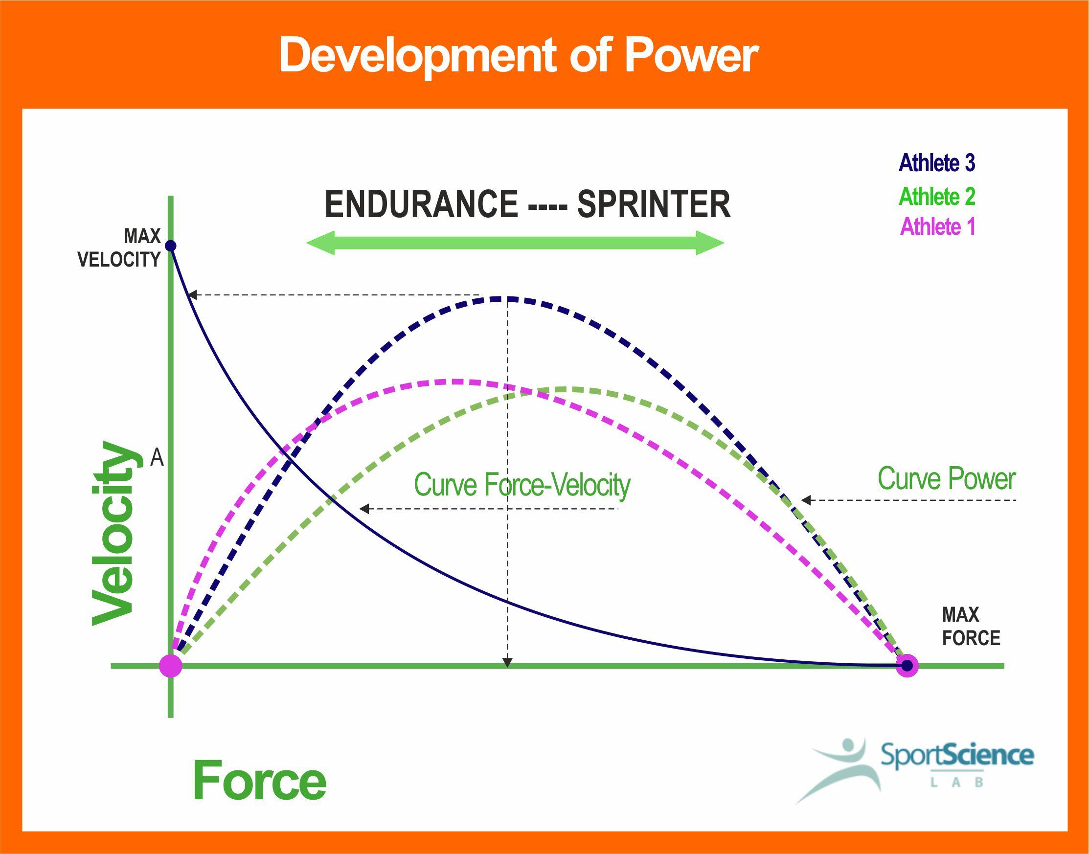 Development of Muscles Power